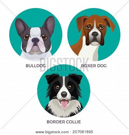 Short hair bulldog, boxer dog and border collie popular canine purebreds in circles vector illustrations of puppies realistic heads faces isolated on white