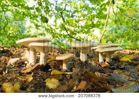 row of beautiful mushrooms under some trees