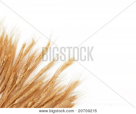 Wheat Stalks Stacked In Corner