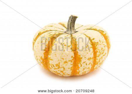 White Gourd Over White