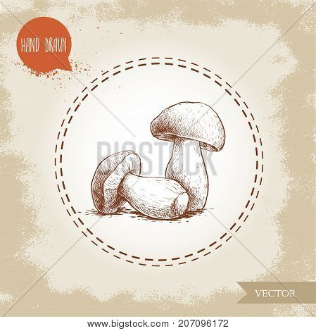 Hand drawn sketch style porcini mushroom composition. Fresh forest boletus edulis. Italian food ingredient. Fresh market product.