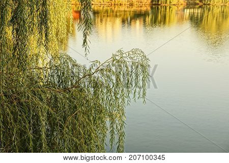 branches of deciduous tree over the water of the lake