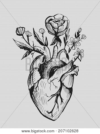 Anatomical heart with flowers. Hand drawn illustration converted to vector