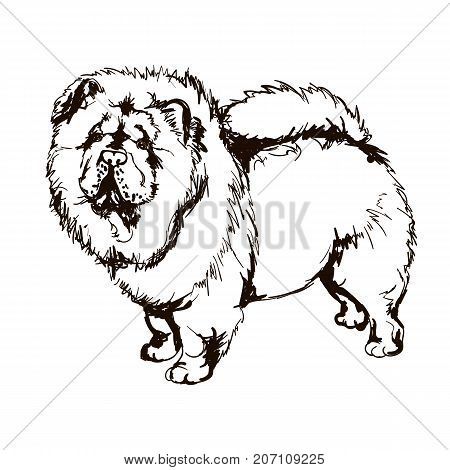 Vector black and white illustration of dog breed Chow-Chow isolated on white background