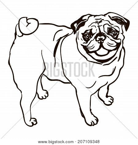 Vector black and white illustration of dog breed pug isolated on white background
