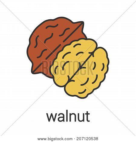 Walnut color icon. Hazelnut. Flavoring, seasoning. Isolated vector illustration poster