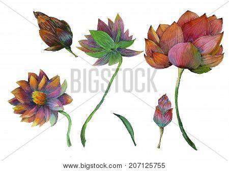 Original set of watercolor painting of aquatic plants of lotus and its leaf