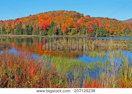 Autumn tree reflections in Vermont