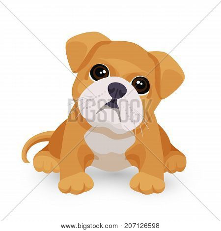 Bulldog puppy cute toy in white and beige color vector illustration isolated on white background. Small dog purebred with kind eyes
