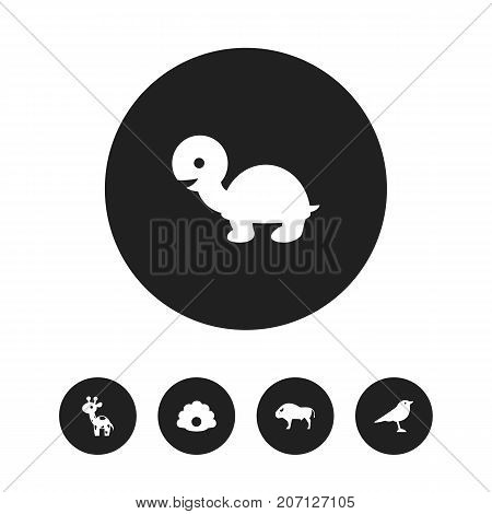 Set Of 5 Editable Zoo Icons. Includes Symbols Such As Catbird, Tortoise, Bison And More