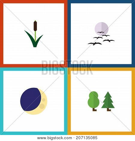 Flat Icon Bio Set Of Gull, Cattail, Half Moon And Other Vector Objects