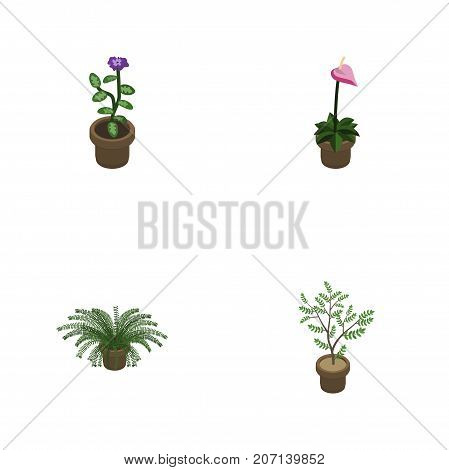 Isometric Plant Set Of Grower, Plant, Flower And Other Vector Objects