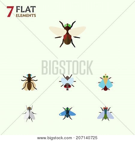 Flat Icon Fly Set Of Buzz, Tiny, Hum And Other Vector Objects