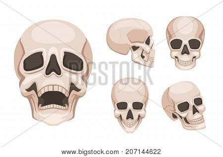 Human skull at different sides. Vector monochrome pictures. Skull skeleton head, death spooky and creepy illustration