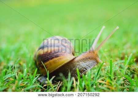 close up of snail on the floor green glass