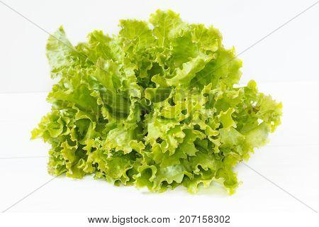 Fresh Organic Leaves Of Green Frisee Lettuce