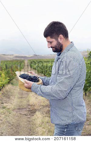 Vertical Man Harvest Vineyard Grapes Syrah Hat