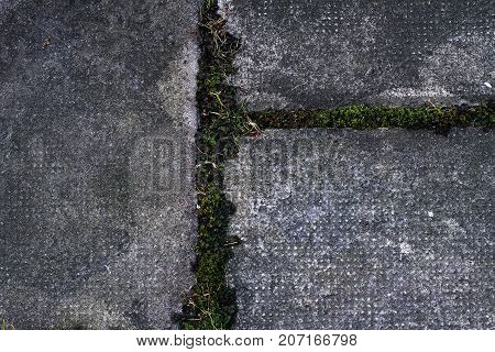 Concrete tile on the sidewalk with grass at the seams