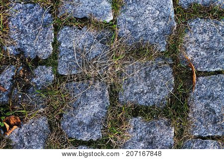 Texture blue paving stones on the sidewalk with grass