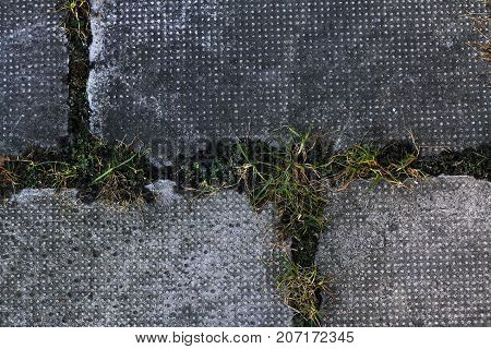 Big City tiles on the pavement with green grass - an interesting texture of asphalt