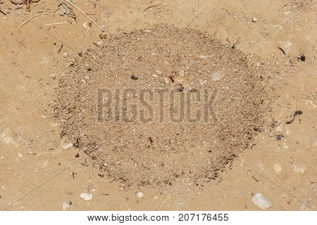 Entrance to round anthill in the desert