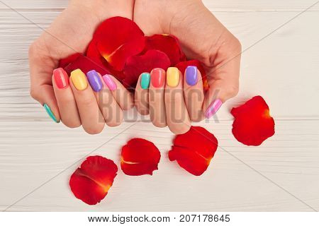 Rose petals in manicured hands. Female hands with summer manicure holding rose petals close up. Salon beauty and spa.