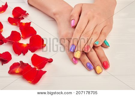 Female hands with short multicolored nails. Well-groomed female hands with manicure, red rose petals on white wooden background. Salon beauty and spa.