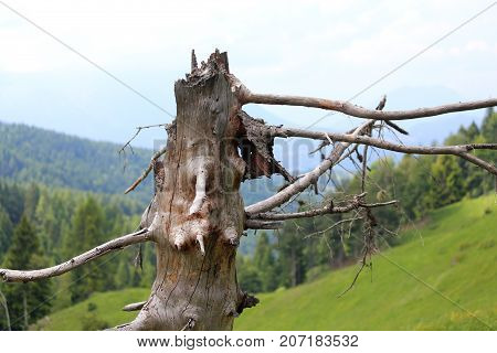 Dry Tree Dead In The Mountains