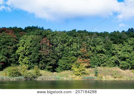 Autumn forest on the shore of a lake or river. In the background a blue sky with white clouds. Trees with leaves of different colors. On the shore of reeds grass and bushes.