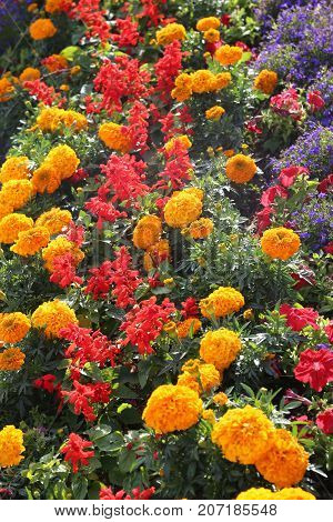 Flowerbed With Many Flowers In Spring