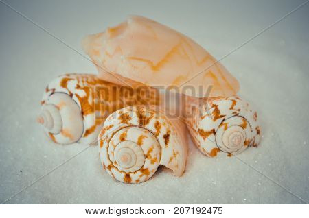 seven or a set of several different shells on a white sand