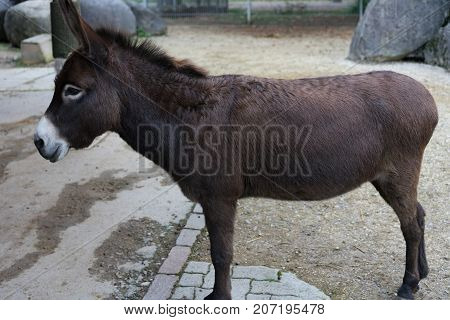 brown donkey in park side view animal farm outdoor
