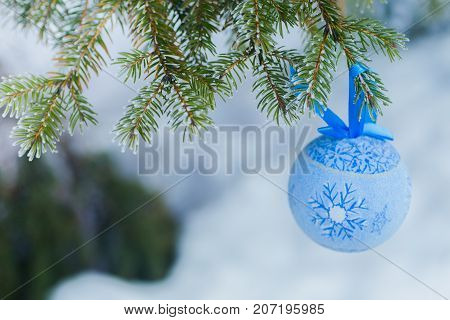 A blue fur-tree toy on a branch of blue fir-tree blue, green, white, Colorado blue spruce, Picea pungens covered with hoarfrost. New Year's Bekraund. A place for a copy-paste.