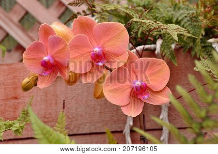 A bouquet of coral colored orchids light up the gardens.