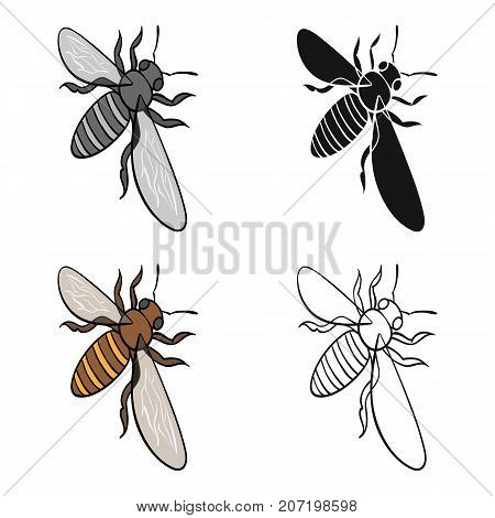 A bee, a hymenopteran insect. Stinging insect bee single icon in cartoon style vector symbol stock isometric illustration .
