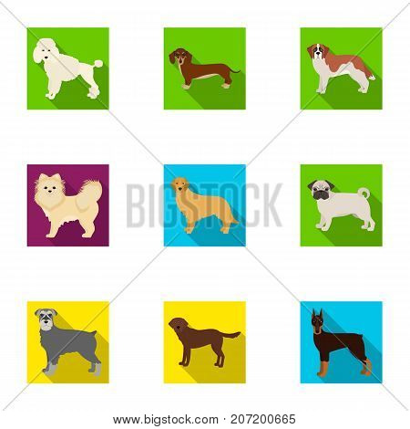 Dalmatian, dachshund, poodle, and other  icon in flat style.Bernard, laika, shepherd icons in set collection