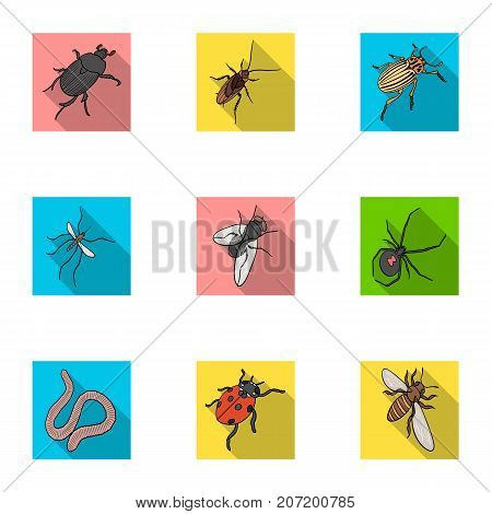 Beetle, wasp, bee, ant, fly, spider, mosquito and other insect species. Various insects set collection icons in flat style vector symbol stock isometric illustration .