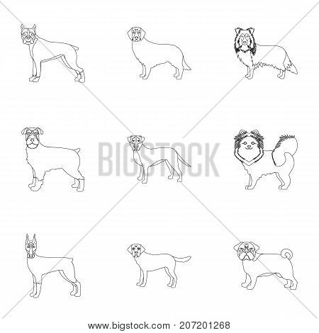 Dalmatian, dachshund, poodle, and other  icon in outline style.Bernard, laika, shepherd icons in set collection