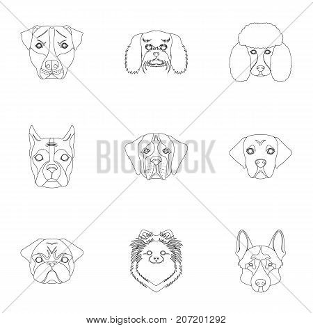Doberman, Dalmatian, Dachshund, Spitz, Stafford and other breeds of dogs.Muzzle of the breed of dogs set collection icons in outline style vector symbol stock illustration .