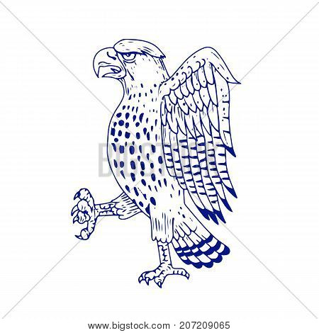 Drawing sketch style illustration of a Sharp-shinned Hawk a medium-sized diurnal bird of prey of family Accipitridae marching side view on isolated background.
