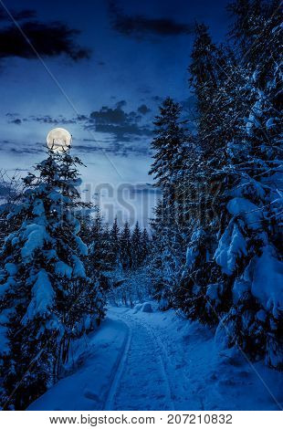 Path Through Spruce Forest In Winter At Night