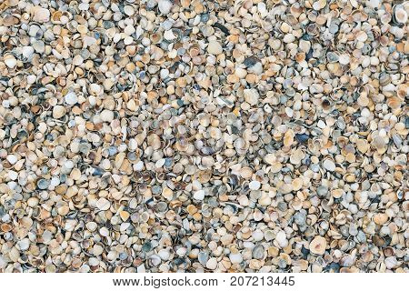Background of sea shells of different colors. Sea shore with lots of shells.