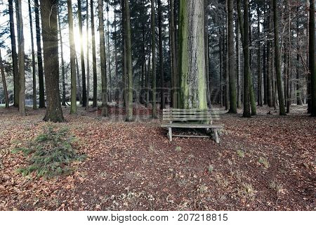 Abandoned wooden bench in the woodland - relaxation