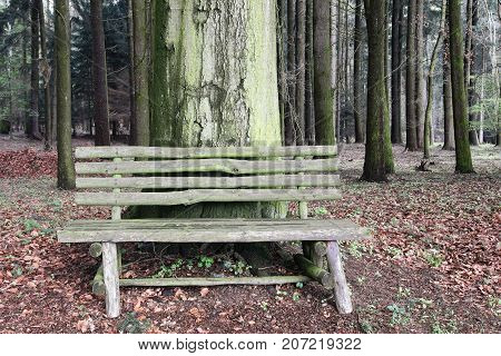 Abandoned wooden bench in the woodland - resting