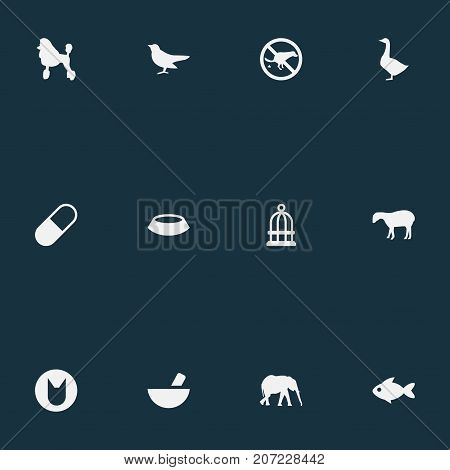 Elements Seafood, Mortar, Bird Prison And Other Synonyms Cat, Cage And Pounder.  Vector Illustration Set Of Simple Zoo Icons.