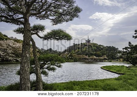 japanese garden with japanese black pine tree near lake and japanese pagoda at backgound