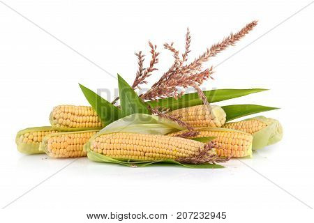 Ripe corn cobs with flowers on white background