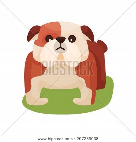 French bulldog dog, purebred pet animal standing on green grass colorful vector Illustration on a white background
