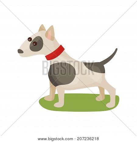 Pitbull dog, purebred pet animal standing on green grass colorful vector Illustration on a white background