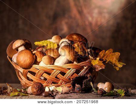 Oak Mushrooms In The Basket, Acorns And Oak Leaves Over Wooden Background
